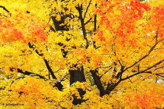 Autumn_Colors-New_England